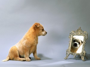 FUnny-Dogs-Reflect-Wallpaper-Free-Download